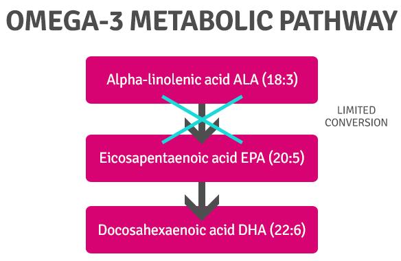 Omega3-Metabolic-Pathways