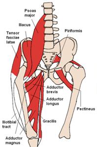 hipspopandsnap-hip-muscles-198x299