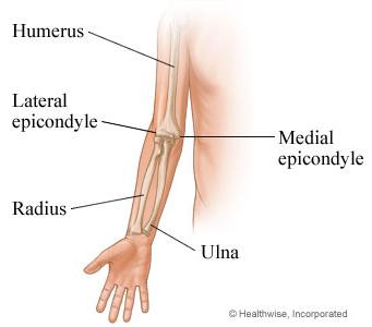 tennis-elbow-anatomy-341x300
