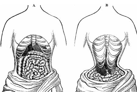 waist-trainer-organs-450x302